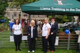 llamas-yorkshire-day-2012