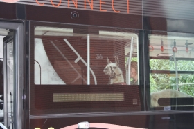 harry-on-the-bus