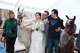 wedding-twit_