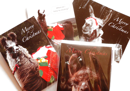llama-christmas-cards