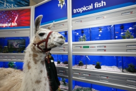 llama-inspects-the-facilities